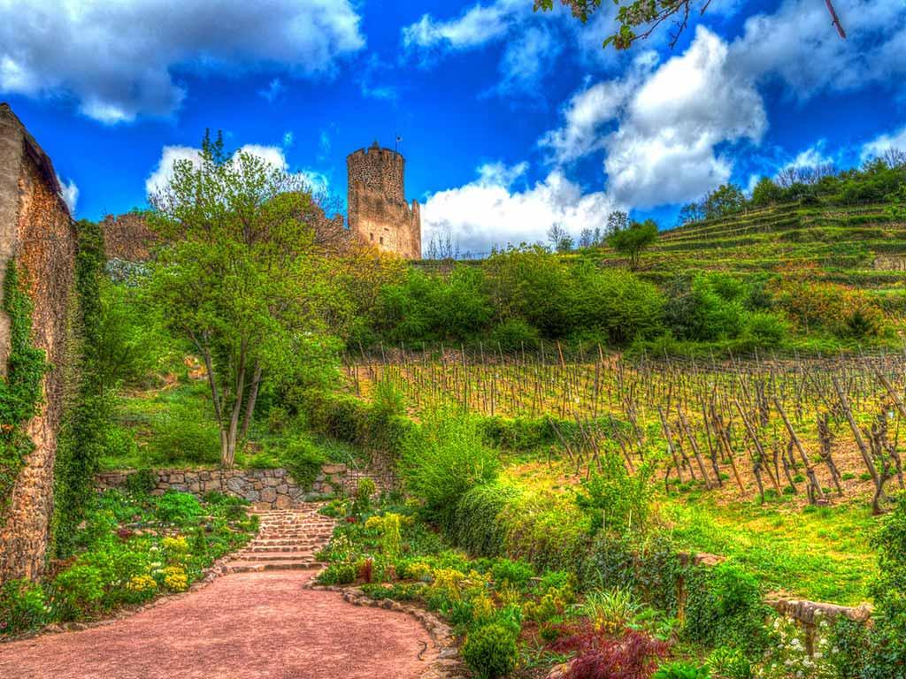 Weinberge im Elsass sind ein tolles Reiseziel in Frankreich